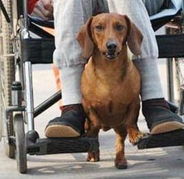 Service-Dog1